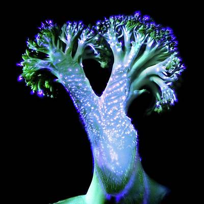 Broccoli Photograph - Broccoli Floret by Robin Noorda