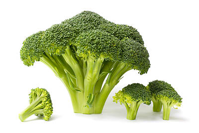 Broccoli Isolated On White Art Print by Donald  Erickson