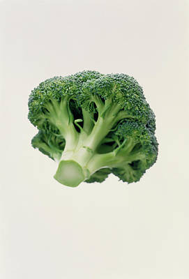 Broccoli Wall Art - Photograph - Broccoli by Sue Prideaux/science Photo Library