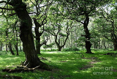 Fangorn Forest Photograph - Brocton Coppice by John Chatterley