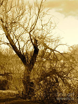 Broken But Beautiful Tree Art Print by Q's House of Art ArtandFinePhotography
