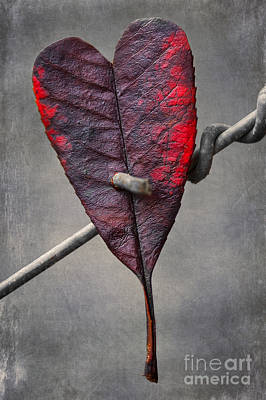 Abstract Hearts Digital Art - Broken Love by Svetlana Sewell