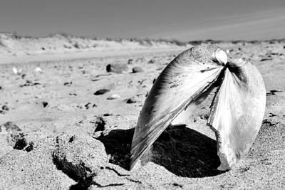 Photograph - Broken Shell  by CJ Rhilinger