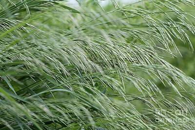 Jem Fine Arts Photograph - Brome Grass In The Hay Field by J McCombie