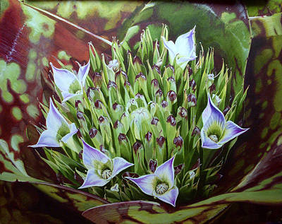 Neoregelia Painting - Bromeliad In Bloom					 by Urszula Dudek