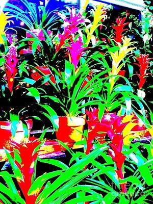 Bromeliads Cu 3 Art Print
