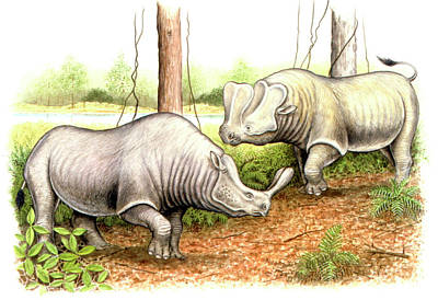 Paleozoology Photograph - Brontotheriid Prehistoric Mammals by Deagostini/uig