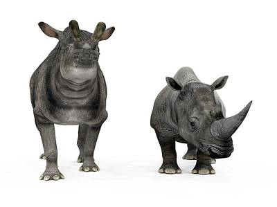 Rhinoceros Photograph - Brontotherium And Rhino Compared by Walter Myers