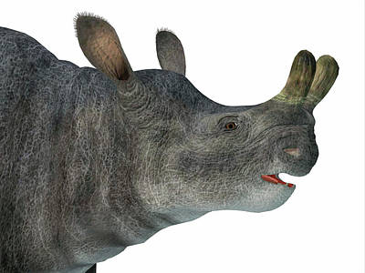 Photograph - Brontotherium Head by Corey Ford