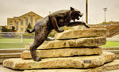 Kansas State Bronze Wildcat Art Print