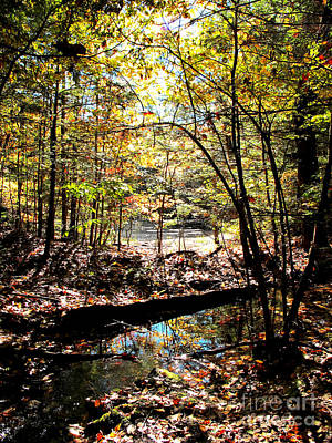 Photograph - Brook And Pond by Linda Marcille