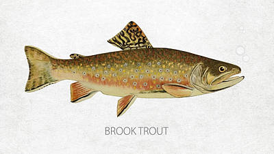 Sport Fishing Digital Art - Brook Trout by Aged Pixel