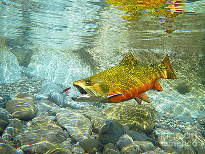 Brook Trout Image Painting - Brook Trout And Artificial Fly by Paul Buggia