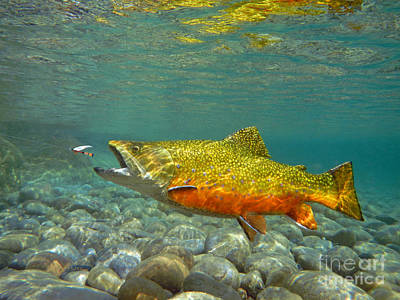 Brook Trout Image Mixed Media - Brook Trout And Royal Coachman by Paul Buggia