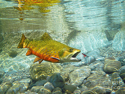 Brook Trout And Silver Doctor Art Print
