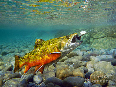 Brook Trout And Spinner Art Print