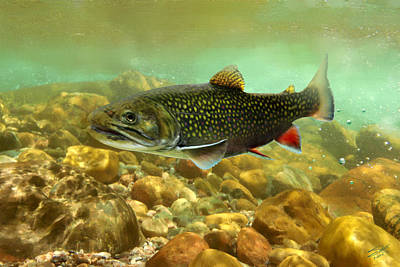 Painting - Brook Trout by IM Spadecaller