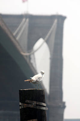 Photograph - Brooklyn Bridge Model Photoshoot by Vadim Levin