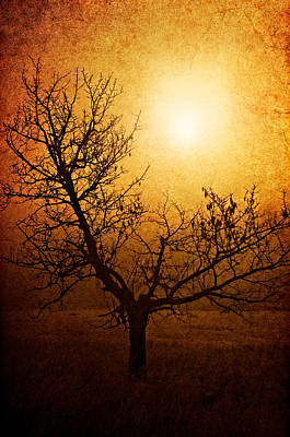 Tree Photograph - Brotherhood Of Light by Roman Solar