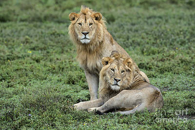 Photograph - Brotherly Love by Sandra Bronstein