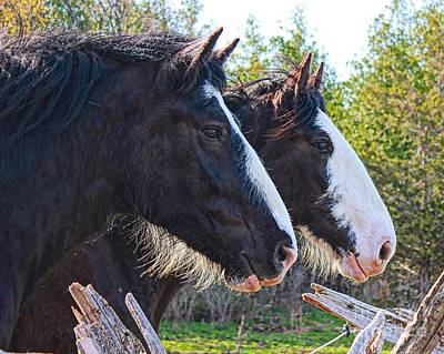 Horse Photograph - Brothers by Angela Marks