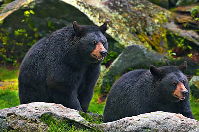 Photograph - Brothers Bear by Mary Almond