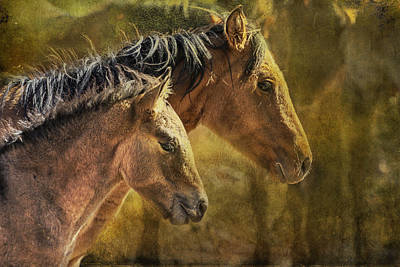 Photograph - Brothers by Belinda Greb