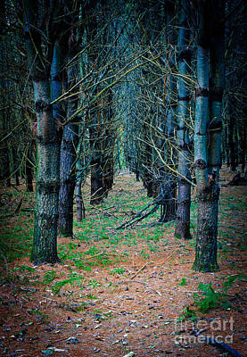 Photograph - Brothers Grimm Forest by Edward Fielding