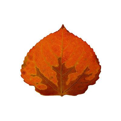 Digital Art - Brown And Orange Aspen Leaf 3 by Agustin Goba