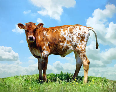 Painting - Brown And White Calf by Ann Powell