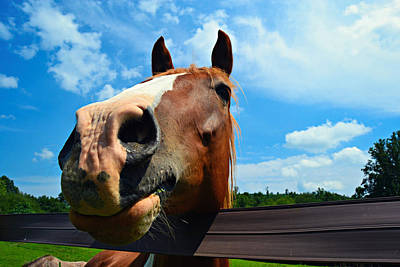 Photograph - Brown And White Horse by Amber Summerow