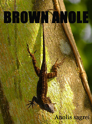 Brown Anole Photograph - Brown Anole Poster Work One by David Lee Thompson