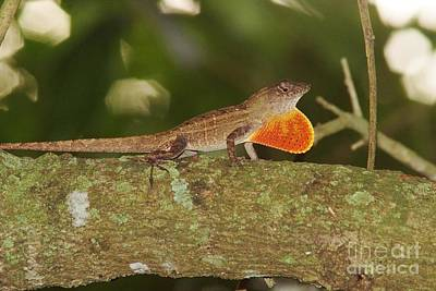 Photograph - Brown Anole Splendor by Lynda Dawson-Youngclaus