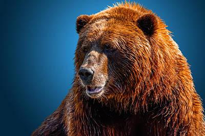 Brown Bear 2 Art Print
