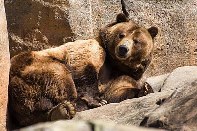 Photograph - Brown Bear Awakens by Chris Flees