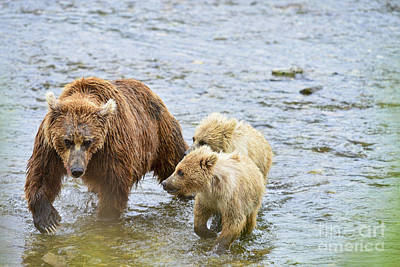 Photograph - Brown Bear Cubs Wanting To Nurse by Dan Friend