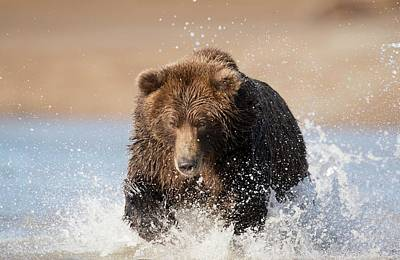 Grizzlies Photograph - Brown Bear by Dr P. Marazzi
