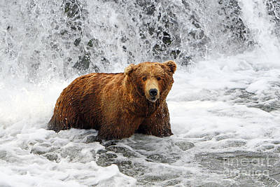 Photograph - Brown Bear Jacuzzi by Bill Singleton