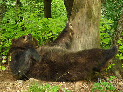 Photograph - Brown Bear - Stretch by Phil Banks