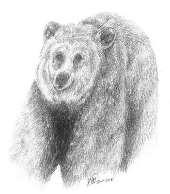 Brown Bear Drawing - Brown Bear Study by Meagan  Visser