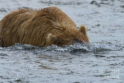 Photograph - Brown Bear Submarine  by Dan Friend
