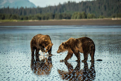 Photograph - Brown Bear, Ursus Arctos, Walking by Bob Smith