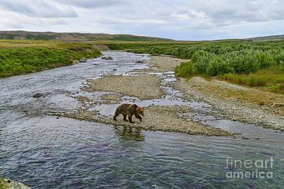 Vintage Movie Stars - Brown bear walking down stream by Dan Friend