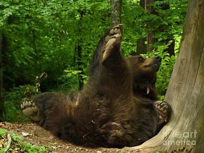 Photograph - Brown Bear - Whoops by Phil Banks