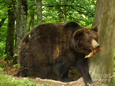 Photograph - Brown Bear - Wood by Phil Banks