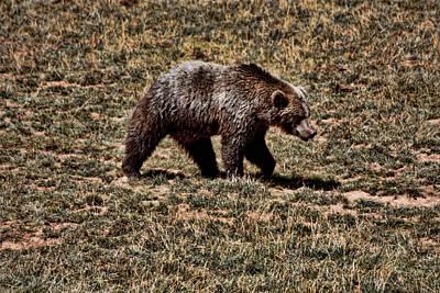 Grizzly Digital Art - Brown Bears by Angel Jesus De la Fuente