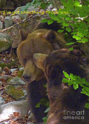 Photograph - Brown Bears Encounter by Phil Banks