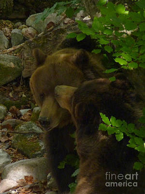 Photograph - Brown Bears - Say Hello by Phil Banks