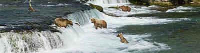 Brown Bears  Ursus Arctos  Fishing Art Print by Gary Schultz
