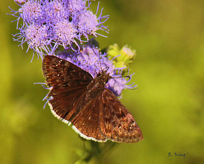 Photograph - Brown Beauty Butterfly by Roena King